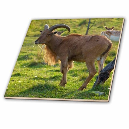 Goat Tile - 3dRose Wild goat on the meadow - Ceramic Tile, 12-inch