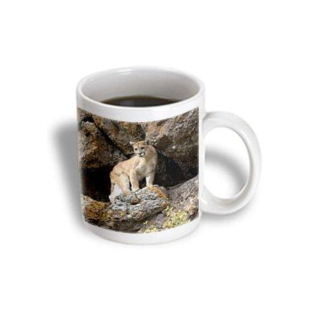 3dRose Puma, Yellowstone NP, Montana - US27 JMC0006 - Joe and Mary Ann McDonald, Ceramic Mug, 11-ounce