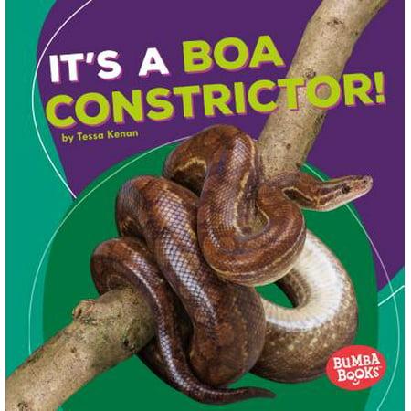 It's a Boa Constrictor!