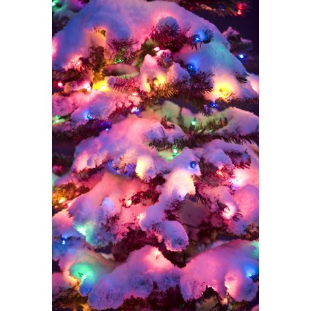 close up of a multi colored christmas tree lit at dusk outside in winter canvas
