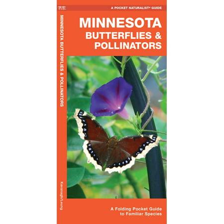 Minnesota Butterflies & Pollinators : A Folding Pocket Guide to Familiar Species (Paperback)