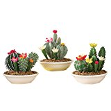 Set of 3 Faux Fake Flowering Cactus Plants in Pots