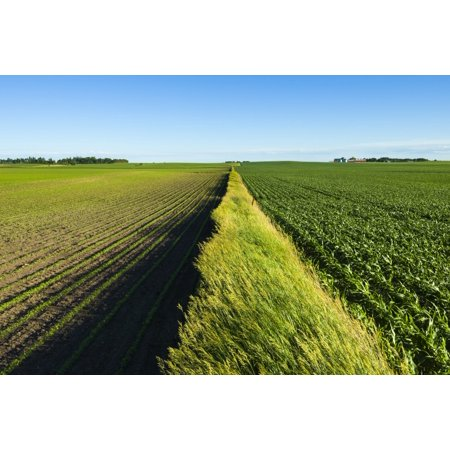 A newly planted soybean field and a green grain corn field separated by a fence row of prairie grasses Iowa United States of America Stretched Canvas - Scott Sinklier  Design Pics (19 x 12)