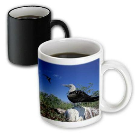 3dRose Sunrise and reflection, Glacier National Park, Montana - US27 AJE0104 - Adam Jones, Magic Transforming Mug, 11oz