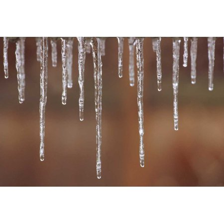 - Single strand of icicles melting North America Poster Print by Gerry Ellis