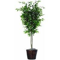 Vickerman 6' Artificial Ficus Deluxe in Rattan Basket