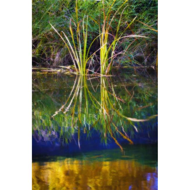 Posterazzi DPI1893057 Reeds Reflecting On The Water - St. Albert, Alberta, Canada Poster Print, 12 x 19 - image 1 of 1