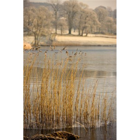 Posterazzi DPI1844667 Frozen Water Around Reeds At Shoreline Poster Print, 12 x 18 - image 1 of 1