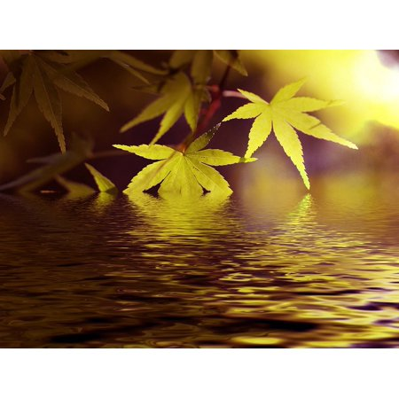 Green Lace Japanese Maple - Canvas Print Japanese Maple Green Lake Maple Fresh Green Water Stretched Canvas 10 x 14