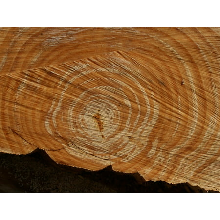 LAMINATED POSTER Annual Rings Structure Wood Sawed Off Grain Nature Poster Print 24 x 36