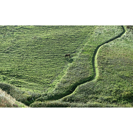 Hillside Path (Canvas Print Path Horse Steps Hillside Hill Stretched Canvas 10 x 14 )