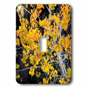3dRose USA, Idaho, Sawtooth National Forest, aspen., Single Toggle Switch