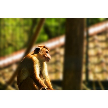Canvas Print Imprisoned Primate Animal Grid Cage Mammal Monkey Stretched Canvas 10 x 14