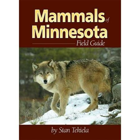 Mammal Identification Guides: Mammals of Minnesota Field Guide (Paperback)