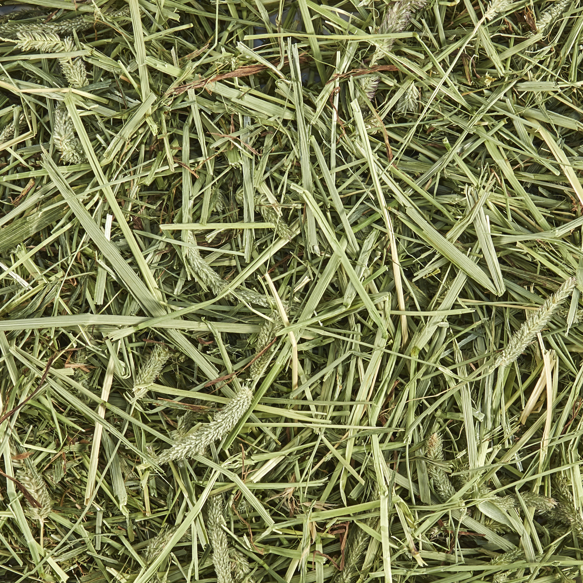 Forti-Diet Natural Timothy Hay, 48.0 OZ