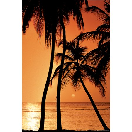 Tropical Sunset Photo Art Print Poster 24X36