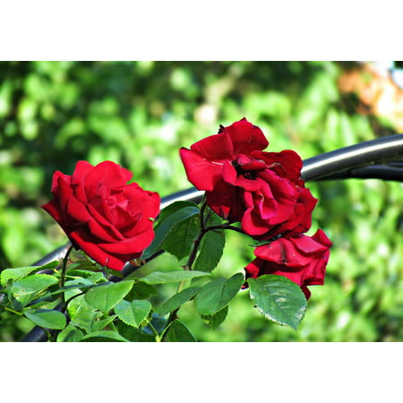 Peel n stick poster of leaving rose flowers the delicacy for Rose adesive