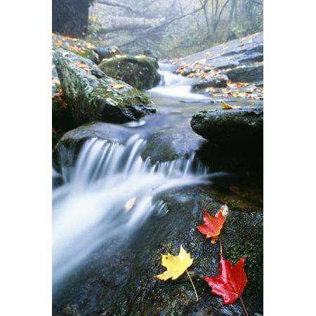 Small Stream Shenandoah National Park Virginia Usa Canvas Art   Bilderbuch  Design Pics  24 X 36