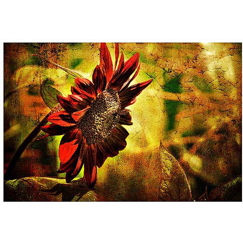 "Trademark Fine Art ""Sunflower"" Canvas Art by Lois Bryan"