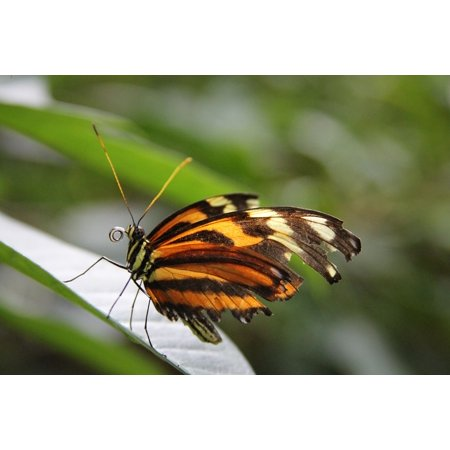 LAMINATED POSTER Bug Nature Insect Garden Butterfly Beautiful Poster Print 24 x 36