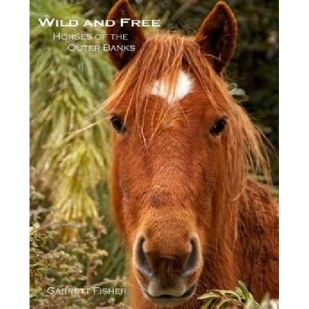 Wild And Free  Horses Of The Outer Banks
