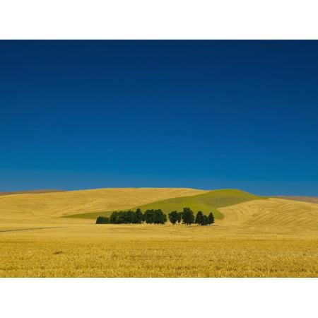 Cemetery With Trees In A Wheat Fieldwashington United States Of America Canvas Art   Richard Desmarais  Design Pics  17 X 13