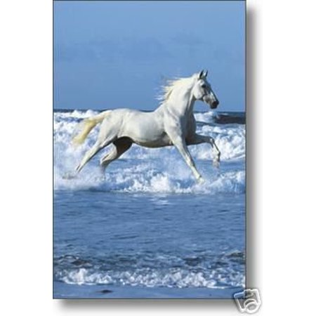 Wild Horse Poster Running On The Beach Poster Print  New 24x36