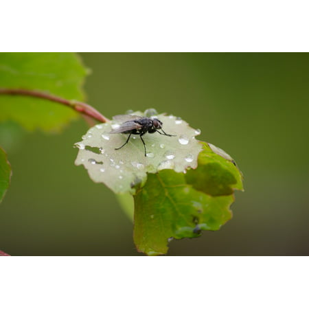 Framed Art For Your Wall Summer Garden Bug Rain Leaf Fly Wet Season ...