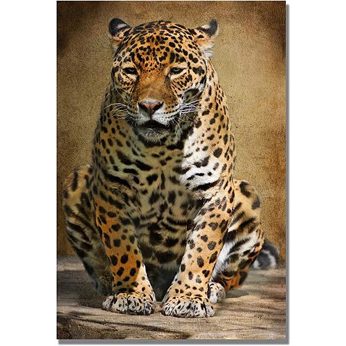 "Trademark Fine Art ""Cheetah"" Canvas Wall Art by Lois Bryan"
