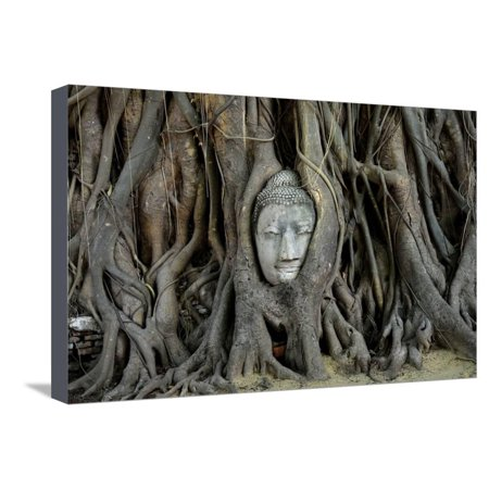 Buddha's Head is Embeded in Tree Roots, A Beautiful Ancient Site in Ayutthaya as A World Heritage S Stretched Canvas Print Wall Art By Flying (16 Most Beautiful Trees In The World)