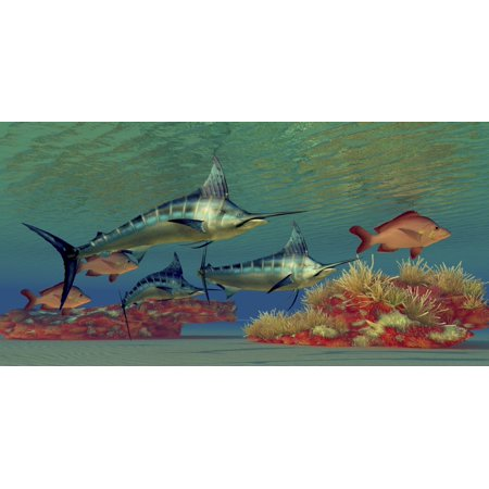 Blue Marlin and Humpback Red Snapper fish glide over a colorful ocean reef full of coral plants Poster Print