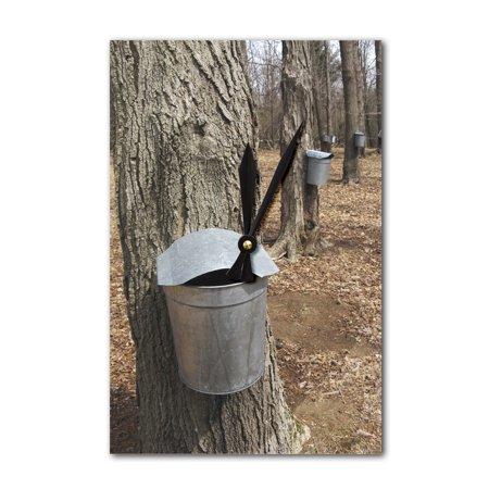 Maple Tree Sap Buckets   Lantern Press Photography  Acrylic Wall Clock