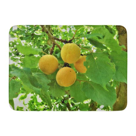 GODPOK South Island New Zealand Dec Apricots is Seasonal Stone Fruit Orchard in Harvest for The First Time Its Rug Doormat Bath Mat 23.6x15.7 inch - Door Dec Ideas