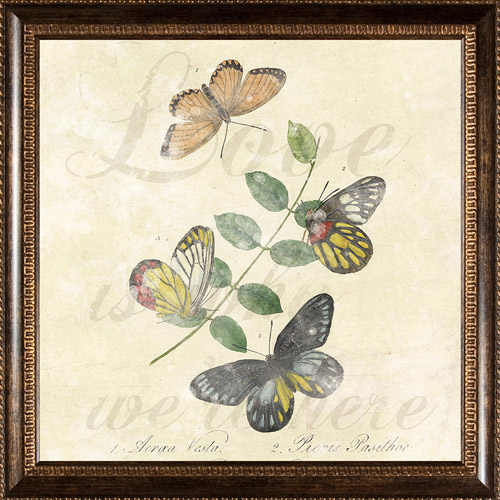Pro Tour Memorabilia Butterflies Framed Artwork by Pro Tour Memorabilia