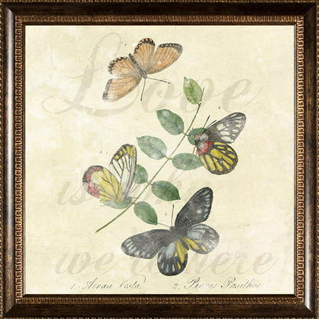 Pro Tour Memorabilia Butterflies Framed Artwork