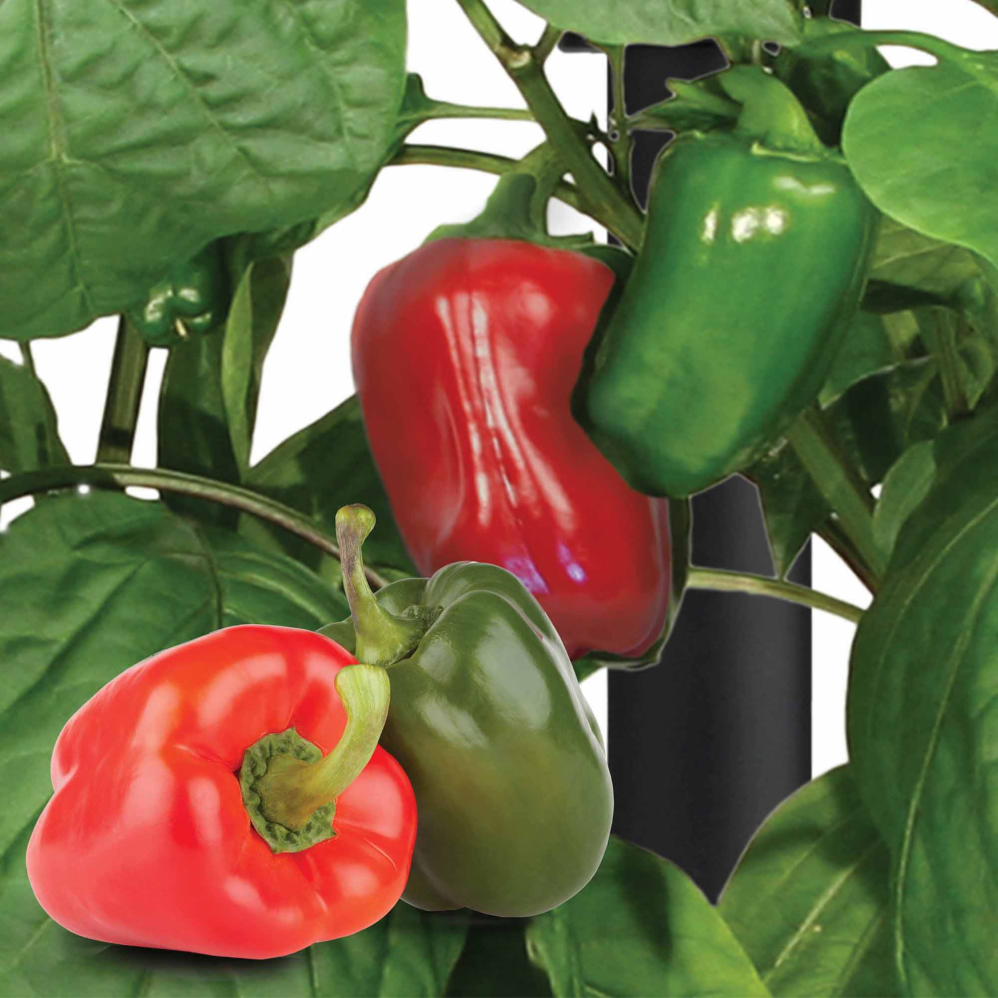Miracle-Gro AeroGarden Sweet Bell Peppers 7-Pod Seed Kit