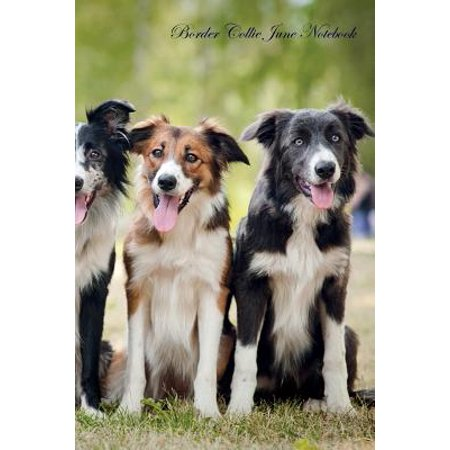 Border Collie June Notebook Border Collie Record, Log, Diary, Special Memories, to Do List, Academic Notepad, Scrapbook &