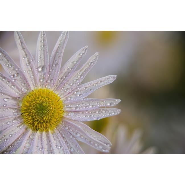 Korean Chrysanthemum New York Botanical Garden - New York City United States of America Poster Print - 18 x 12 in. - image 1 of 1