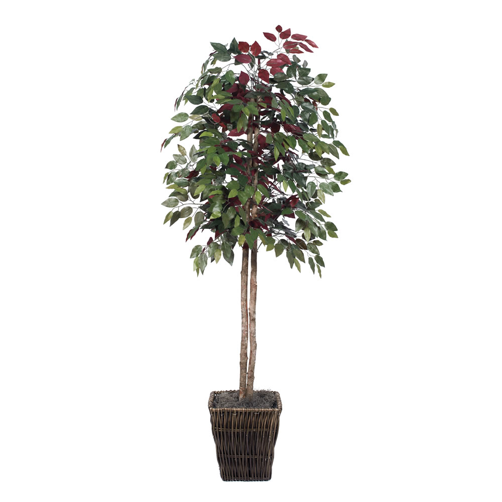 Vickerman 6' Artificial Capensia Tree in Square Willow Container