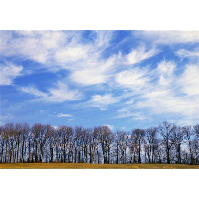 Posterazzi DPI1789552LARGE Trees & Clouds Poster Print by Natural Selection Tony Sweet, 36 x 24 - Large - image 1 of 1