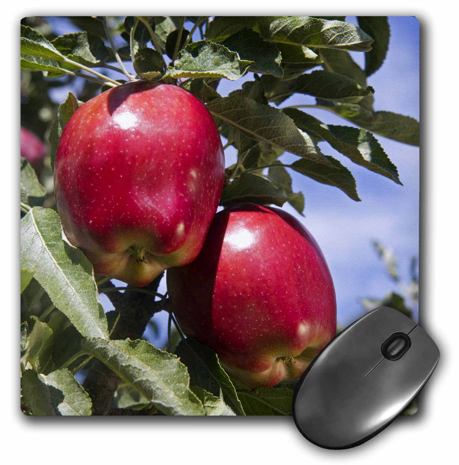 3dRose Red Delicious apples, agriculture, Idaho - US13 DFR1143 - David R. Frazier, Mouse Pad, 8 by 8 inches