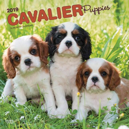 2019 Cavalier King Charles Puppies Wall Calendar, by BrownTrout