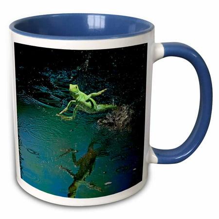 3dRose Green basilisk, plumed basilisk, Costa Rica - SA22 AMR0011 - Andres Morya Hinojosa - Two Tone Blue Mug, 11-ounce
