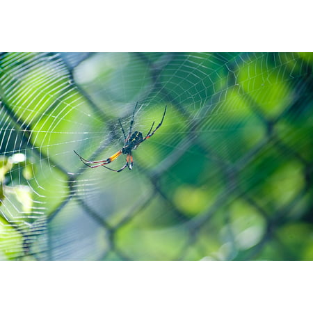 Canvas Print Macro Green Web Spider Stretched Canvas 10 x 14](Spider Web Lights)