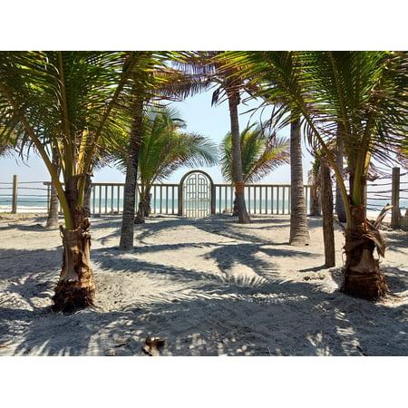 Canvas Print Palms El Salvador Beach Fun Palm Tree Stretched Canvas 32 x 24