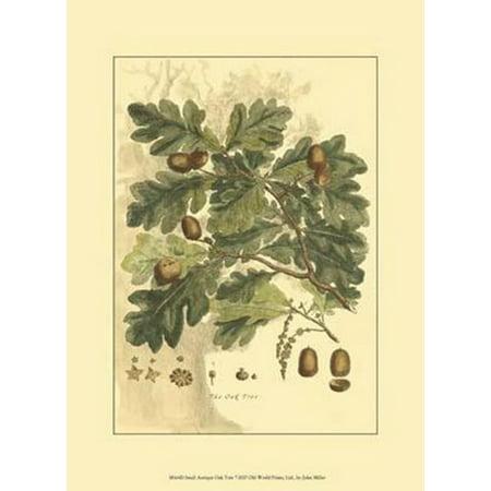 Small Antique Oak Tree Poster Print by John Miller (10 x 13)