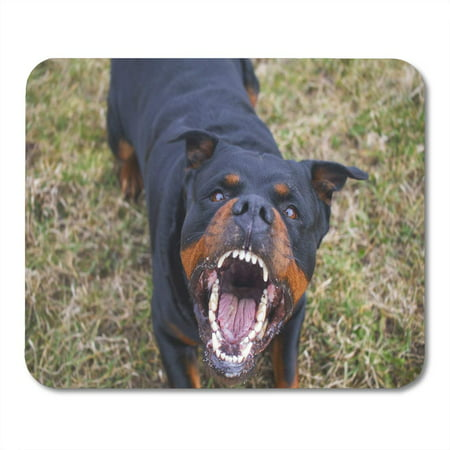KDAGR Growl Dog Aggressive Rottweiler Barking Mad Angry Fear Mousepad Mouse Pad Mouse Mat 9x10 inch