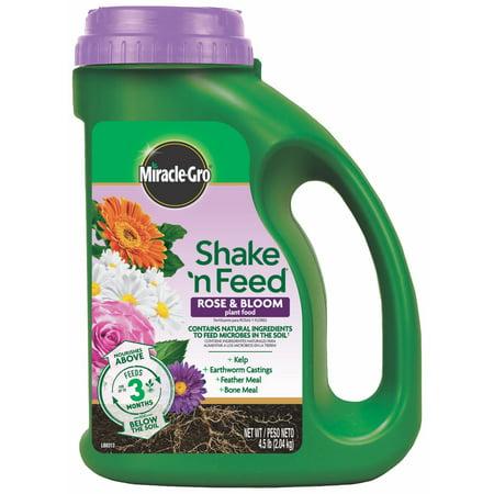 Edelstein Moss Rose - Miracle-Gro Shake 'N Feed Rose & Bloom Plant Food