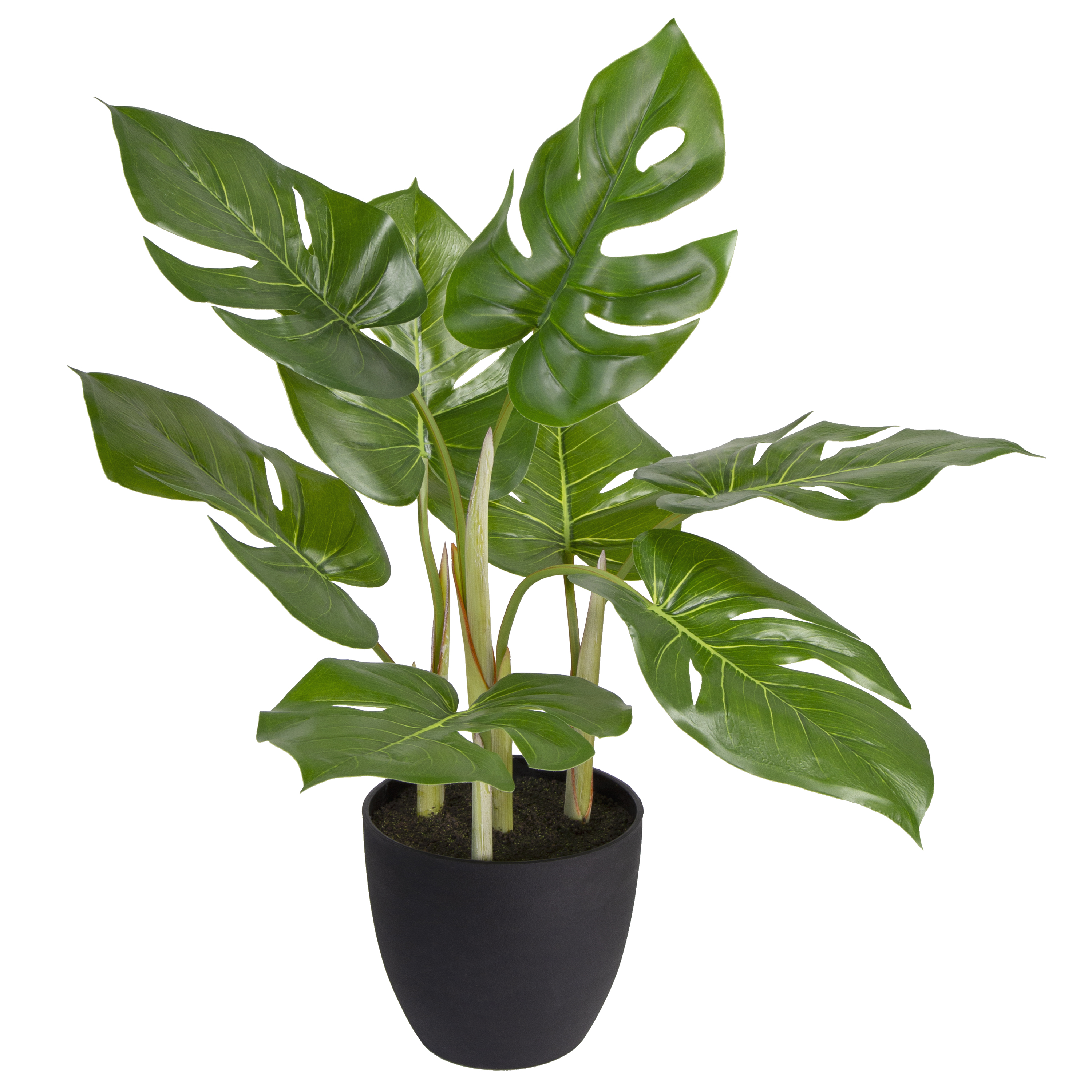Mainstays Potted Monstera