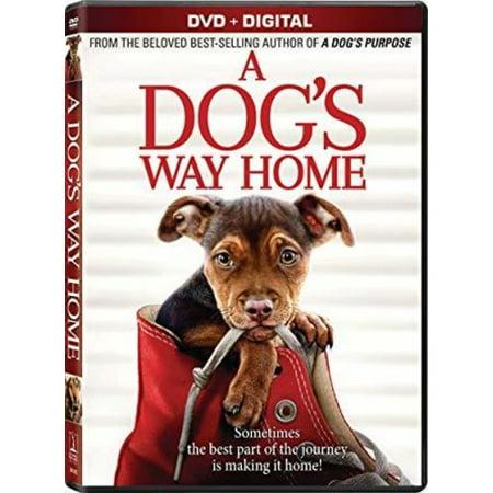 A Dog's Way Home (DVD + Digital Copy)